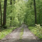 Les gîtes de Cherlieu.Sentier de randonnées